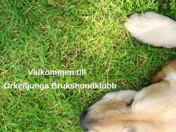 www.orkelljunga-bk.se